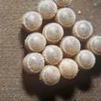 チャバネアオカメムシ卵